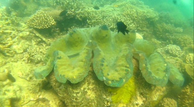 Masinloc Eco-Tour: Giant Clam/Taklobo Farm, Mangroves Forest Island, Bacala Guesthouse, and San Salvador Island