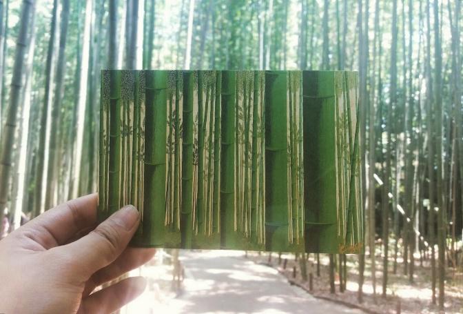 Kyoto, Japan: Arashiyama Bamboo Grove and Tenryu-ji